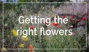 getting-the-right-flowers